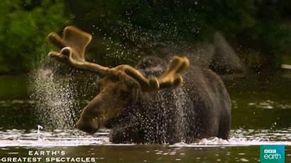 Wildlife Natural Bbc Animal Earth Animals Gifs