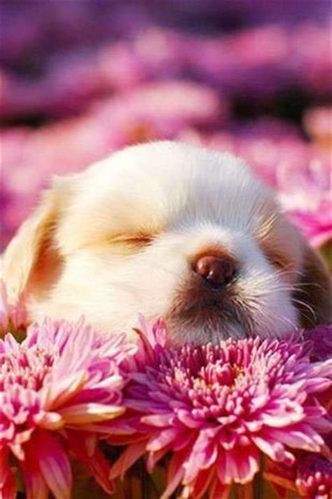 adorable puppy sleeping  flowers pictures