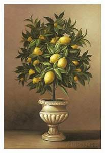 stencil it potted lemon tree posters by welby at allposters com