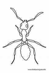 Coloring Bug Outlines Template Ants Clip Potato Draw Ant Outline Butterfly Insects Google Animal Templates sketch template