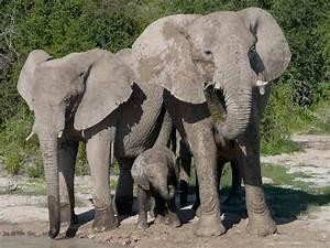 Flüssigkeitsbedarf Berechnen : elefanten aufsatzsammlung sparkling science wissenschaft im austria forum ~ Themetempest.com Abrechnung