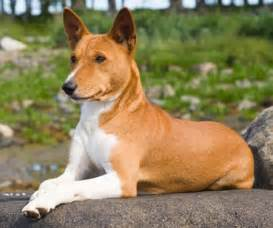 hypoallergenic dog breeds bunkblog