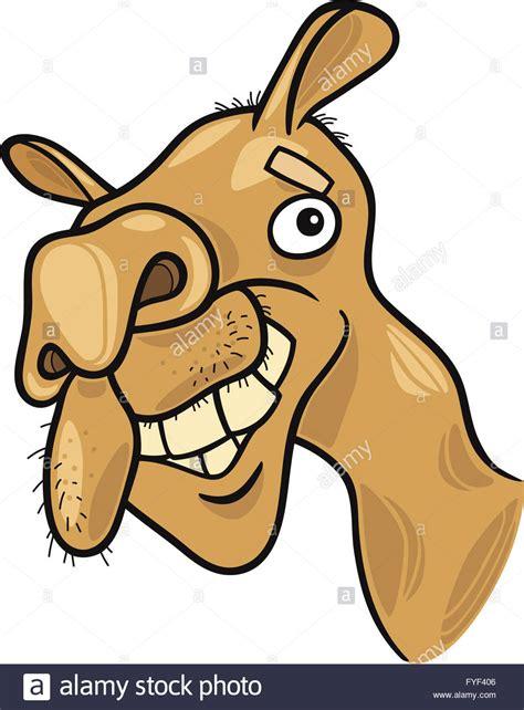 cartoon cammello dromedario foto immagine stock