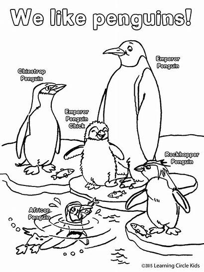 Penguin Coloring Printable Pages Bee Penguins Books