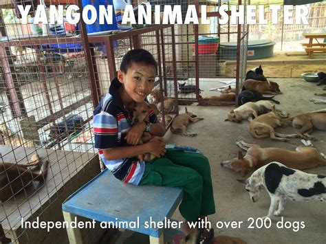 animal yangon myanmar