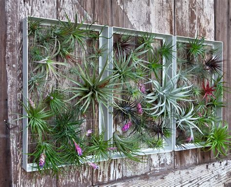 living wall vertical garden frames by airplantman design