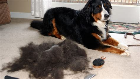 shed dogs the 9 best pet hair vacuums in 2019 that actually work