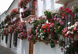 Blumen Für Schatten : blumen fur balkon im schatten pflanzen ~ Lizthompson.info Haus und Dekorationen