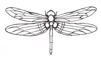 basic outlines of dragonflies dragonfly tattoos designs and ideas page 28