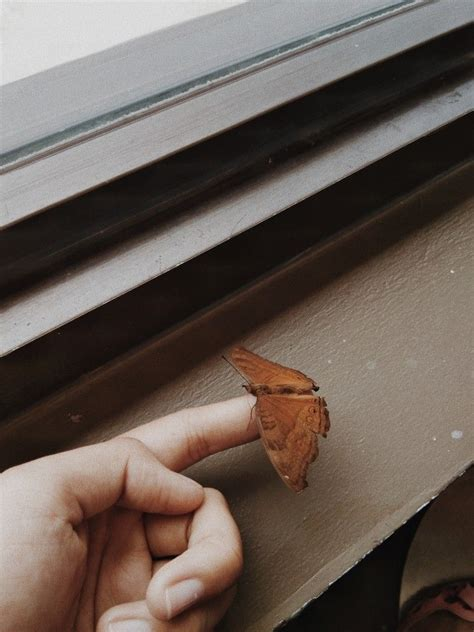 brown aesthetic photography butterfly nature vintage
