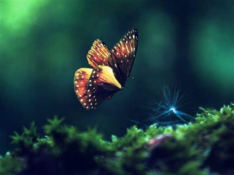 Hinh-nen-thien-nhien-butterfly-buom-dep