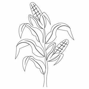 Corn Stalk Drawing - Bing images | Cloth pin | Pinterest ...