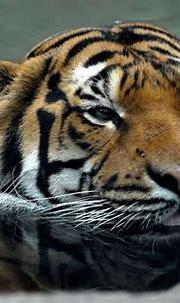 Cincinnati Zoo & Botanical Garden Liked · July 5 . The ...