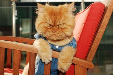 garfi el gato  peor humor del mundo vive enojado