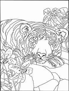 Free Tiger Lily Designs Tiger Face Coloring Pages Getcoloringpages Com