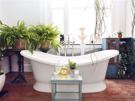 Plants For Bathrooms Uk by Houseplants That Thrive In Your Bathroom The Of Plants