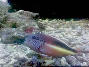 Welche Fische Passen Zusammen Aquarium : die unterschiede von s wasser und meerwasseraquarien ~ Lizthompson.info Haus und Dekorationen