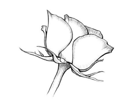 gallery drawing  shading  beginners drawings art