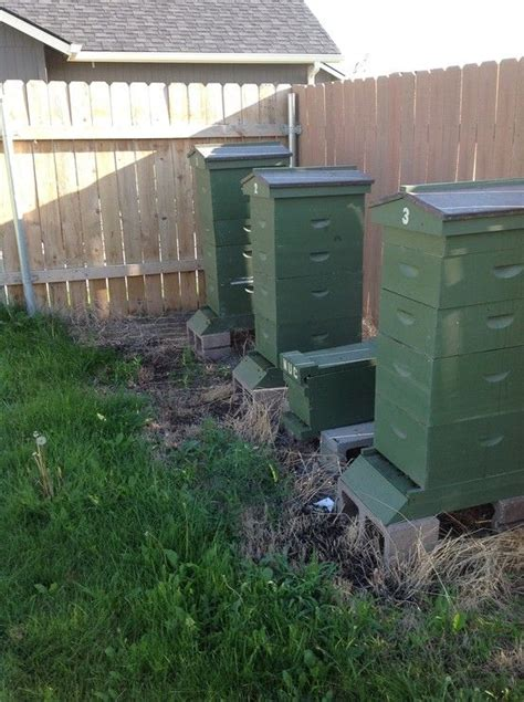 Backyard Honey Bee Hive by 42 Best Hives Pictures Of Hives All Images On