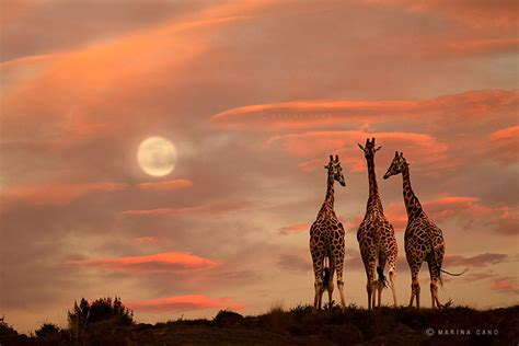 11337 professional photography nature the majestic of animals captured by marina