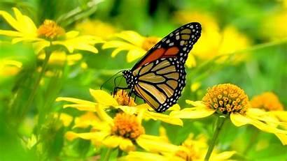 Butterfly Yellow Flowers Flower Creative Community
