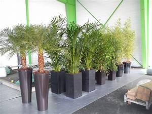 Deco Plante Exterieur Mc Immo