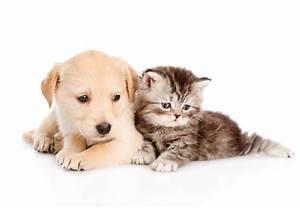 Dog And Cat Wallpaper Cute Wallpapers Kittens Puppies Desktop Litle Pups