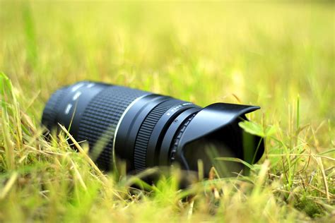 Nature, Grass, Lawn, Camera, Photography