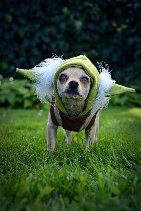The Dog Geek: Happy Star Wars Day!