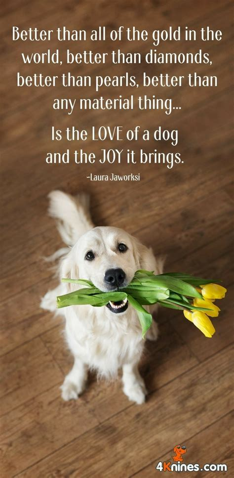 pin  kyle stevenson  pet quotes dogs puppy quotes