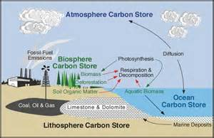 green fork utah the carbon cycle