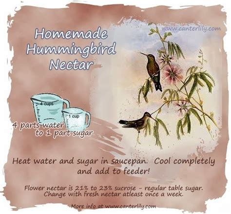 how to make hummingbird nectar homemade hummingbird nectar bats birds chickens pinterest