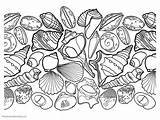 Coloring Seashell Seashells Colouring Sheets Printable Ocean Ones Pick Enjoy Without sketch template