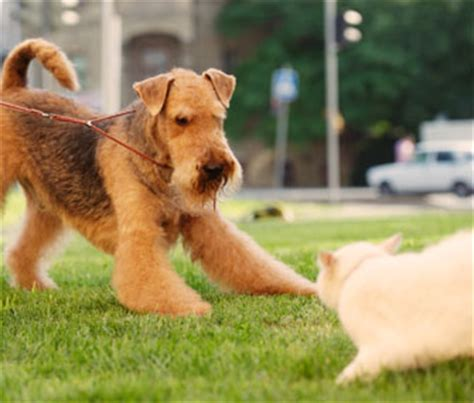 stop  dog  chasing cats