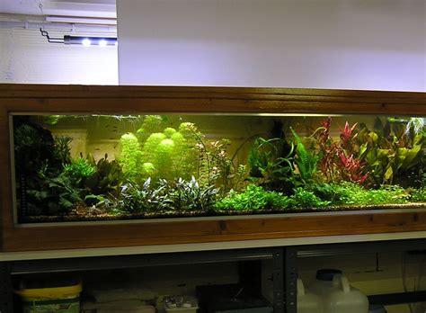mon aquarium et ses secrets