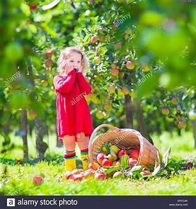 Einen Korb Bekommen Englisch : entz ckende kleine kleinkind m dchen mit dem lockigen haar tr gt ein rotes kleid umgekippt ~ Orissabook.com Haus und Dekorationen
