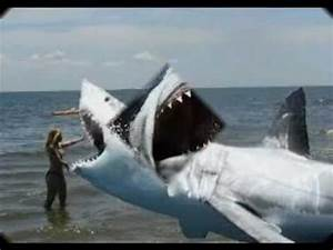 Megalodon Still Alive?????? - YouTube