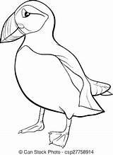Puffin Coloring Pages Cartoon Rock Bird Colouring Atlantic Star Illustration Vector Printable Izakowski Template Getcolorings Successful Depositphotos Print Getdrawings Sketch sketch template
