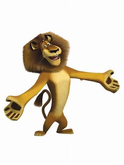 Madagascar Lion Imagens Imagem