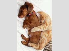 Cuddling Cat And Dog Pictures, Photos, and Images for