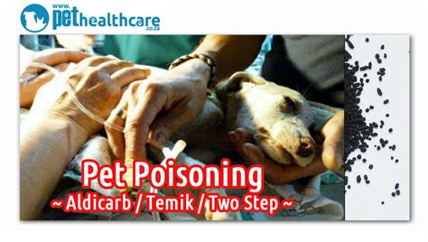 pet poisoning   rise  south africa pet health