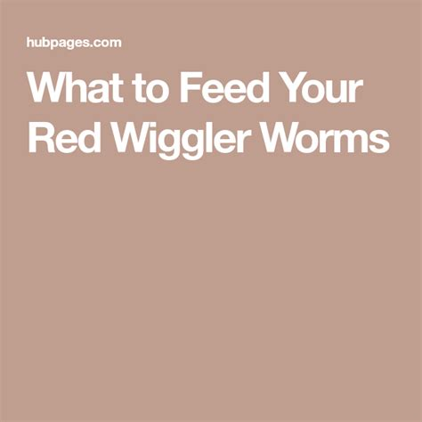 worms wiggler hubpages