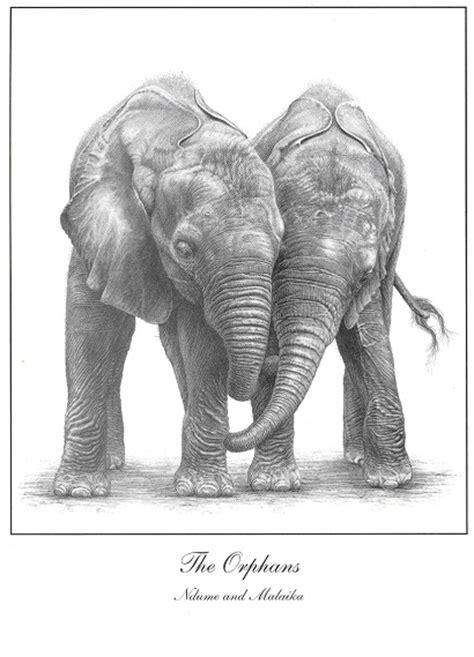 raising elephant orphans
