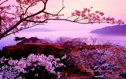 Sakura Tree Pc 2560 Desktop Animated Nature