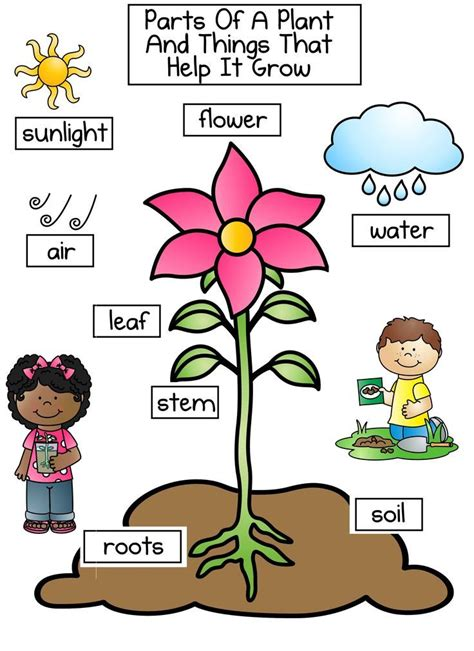 awesome plant  clipart projects   plant