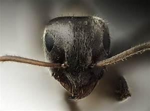 Anti Fourmi Naturel : anti fourmis 100 naturel ~ Carolinahurricanesstore.com Idées de Décoration