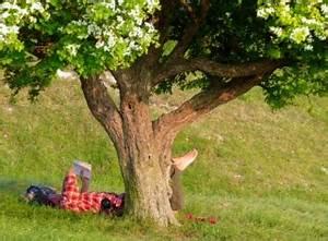 Arbre à Croissance Rapide Pour Ombre : arbre sieste tout ~ Premium-room.com Idées de Décoration