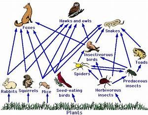 Ecosystem Relasionship