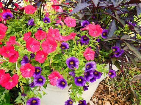 Long Lasting Flowers For Garden  Garden Ftempo