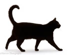 walking cat black hair cat walking profile photo wp15741